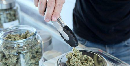 Bud tenders weighing weed at cannabis dispensary